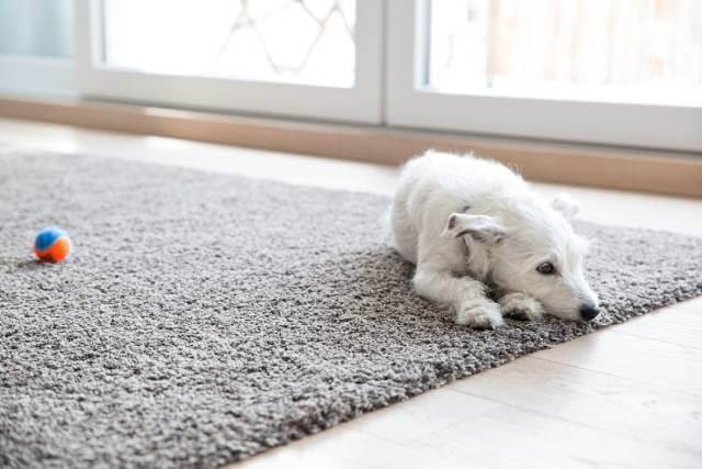 فاکتور های موکت مناسب برای حیوانات خانگی | شرکت زت کارپت